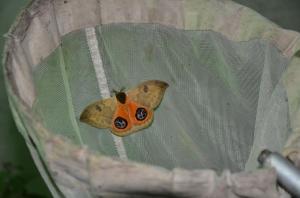 Moth_zps02ffcb06